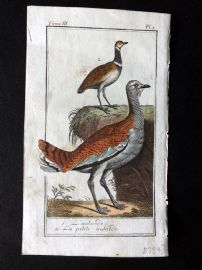 Buffon 1785 Antque Hand Colored Bird Print. Bustard 3-1